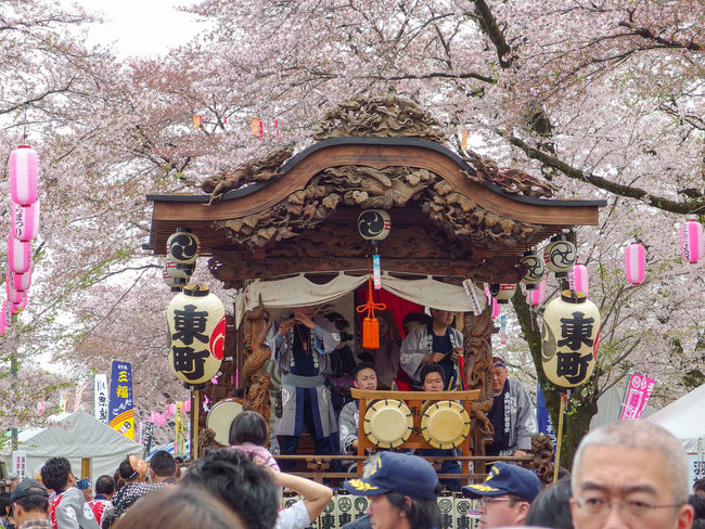 japanese people enjoy with traditional music show at Hanami sakura cherry blossom festival. Sand Cherry Blossom Tokyo Japan Japanese  Cultures Traditional Clothing Costume Music Hanami Festival Funny Enjoy View People Crowd Tree Park Outdoors Show Matsuri Hamura City Day Season