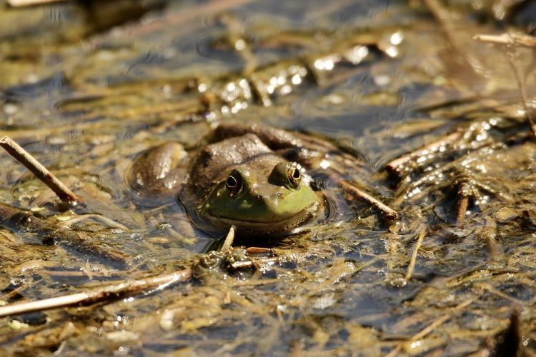 Close-up of frog in sea