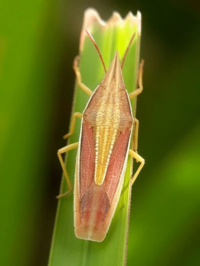 insect