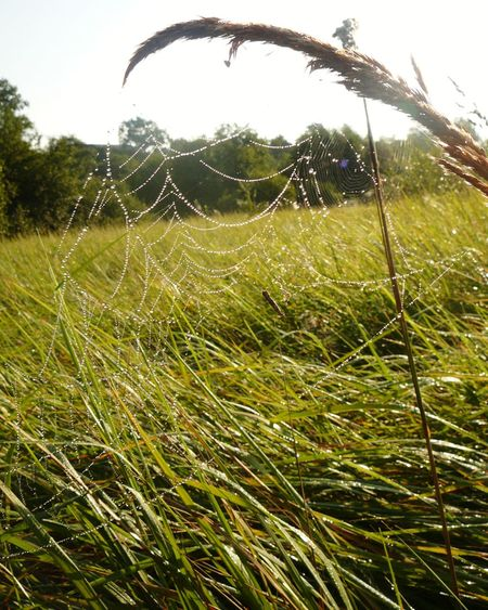 Beauty ❤️ EyeEm Nature Lover Green Country Life Sunlight And Shadow Resting Place Wildlife & Nature Beauty In Nature Spider Web Morning Drop On Spider Web Summer Tree Rural Scene Field Sky Grass Close-up Plant Life Countryside Dew Drop RainDrop Water Drop