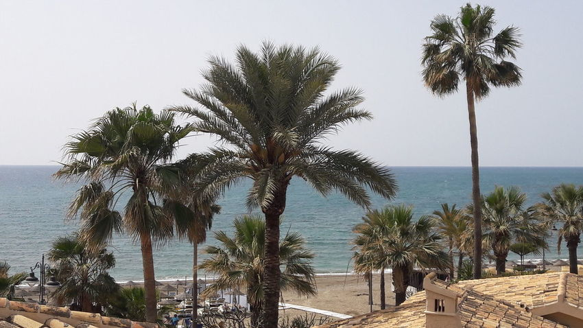 Tree Beach Sea Palm Tree Water Sand Horizon Over Water Tranquility Scenics Nature Outdoors Beauty In Nature Beauty In Nature Nature Palm Tree Tranquil Scene Day Sky Growth No People Vacations Summer Benalmádena, Malaga, Spain High Angle View Tree