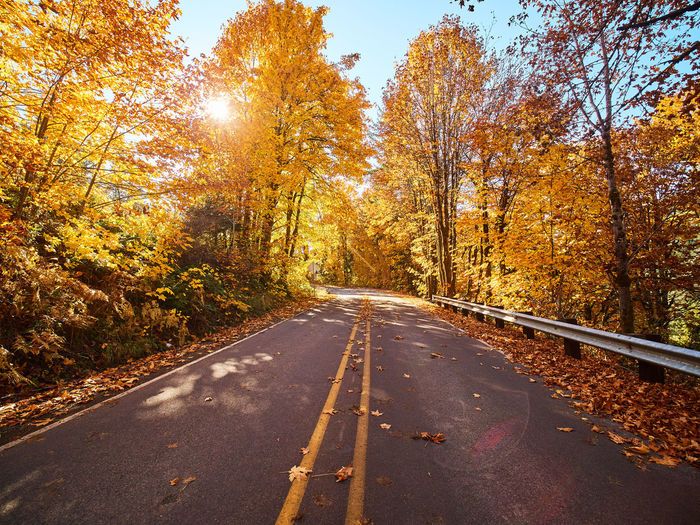 Autumn Beauty In Nature Change Day Leaf Nature No People Orange Color Outdoors Road Scenics Sky The Way Forward Tranquility Transportation Tree