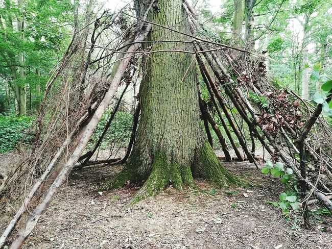 Summer Beautiful Nature Den Building Funwithfriends Teepee Shaped Childhood