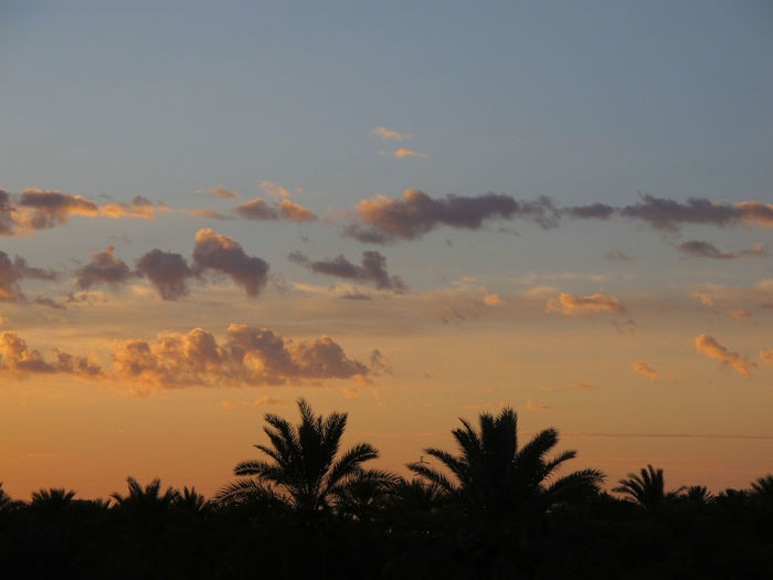 Tunisia travel holidays Sunset Sky Beauty In Nature Scenics - Nature Tranquility Tranquil Scene Cloud - Sky Plant Tree Silhouette No People Nature Growth Orange Color Idyllic Non-urban Scene Palm Tree Tropical Climate Outdoors Environment