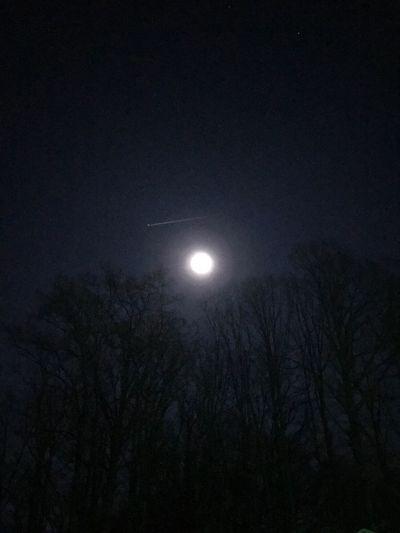 Moon Full Moon Astronomy Moonlight Night Beauty In Nature Sky Tranquil Scene Planetary Moon Illuminated Tree Outdoors Nightphotography Nightlife Full Moon Night Skys Moon Shots Beauty Of The Night Night View Nightshot