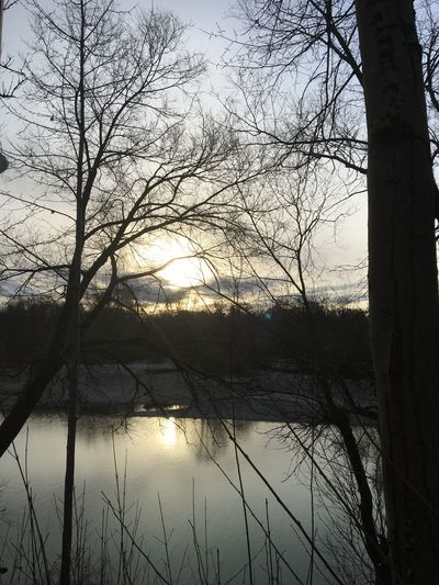 Silhouette bare trees by lake against sky during sunset
