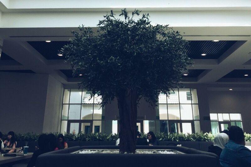 Peace Plant Tree Architecture Built Structure Real People Women Building Exterior Nature Day Lifestyles Potted Plant Architectural Column Group Of People Men Adult People