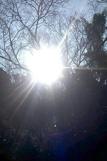 Sun Sunbeam Nature Tree Beauty In Nature