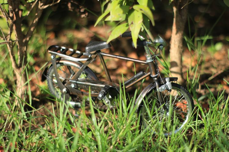 Aceh Plant Land Field Nature Green Color Day Grass Selective Focus Transportation Mode Of Transportation Land Vehicle Growth Outdoors No People Leaf Plant Part Metal Abandoned Rusty Damaged Wheel