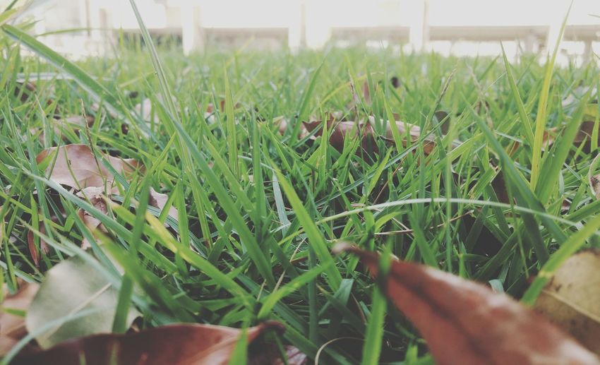 Plant Nature Green Color First Eyeem Photo Beauty In Nature Agriculture No People Grass Day EyeEmNewHere