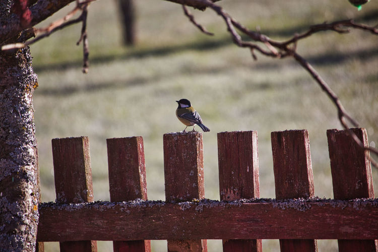 Bird perching on metal fence