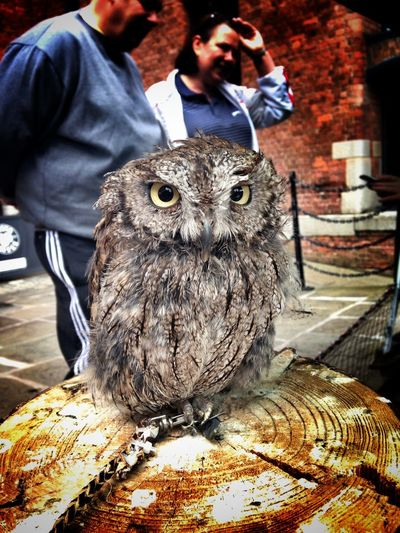 Albertdock Liverpool Owls AlbertDocks Liverpool