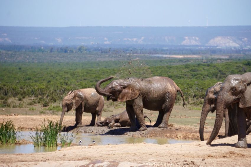 Wildlife South Africa Traveling Safari Game Drive Landscape