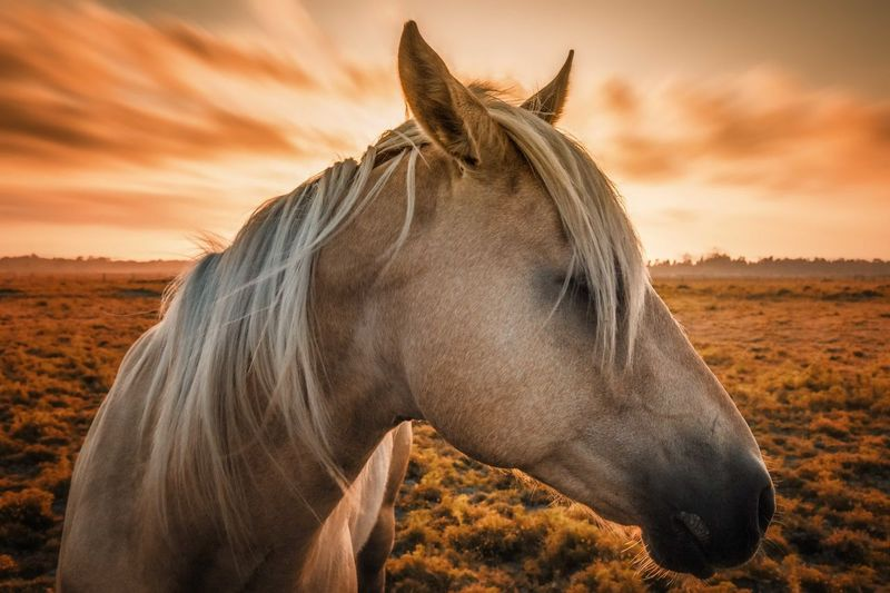 Side View Of Horse Against Sky During Sunset