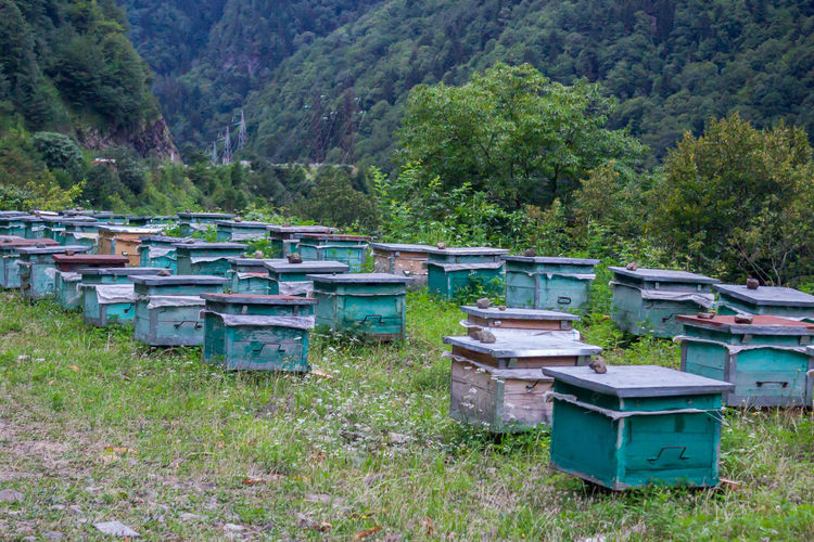 Bee breeding in wooden hives Hive Outdoors Beehive Nature Mountains Travel Summer Wildflowers Flora Tree APIculture Bee Beehive Grass Green Color Honey Bee Insect Honeycomb Cultivated Land Growing Farmland Buzzing Pollination Grassland