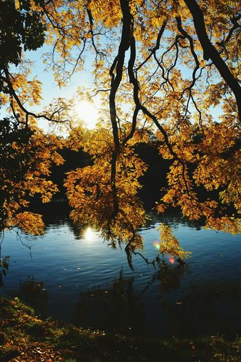 Tree Reflection Water Lake Nature Sunset Outdoors Reflection Lake No People Landscape Sky Branch Beauty In Nature Extreme Weather Day Besancon Franchecomte