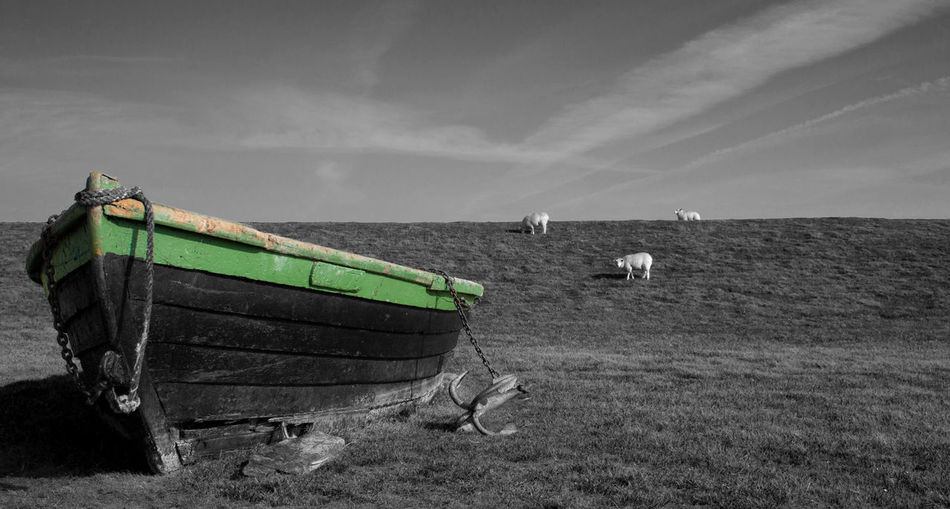 Nautical Vessel Sky Transportation Mode Of Transportation Land Nature Day Cloud - Sky No People Landscape Water Field Horizon Sea Rowboat Outdoors Boat Stranded Deich  Blackandwhite Colored Background Wood - Material Wooden Boat Sheep EyeEmNewHere My Best Photo