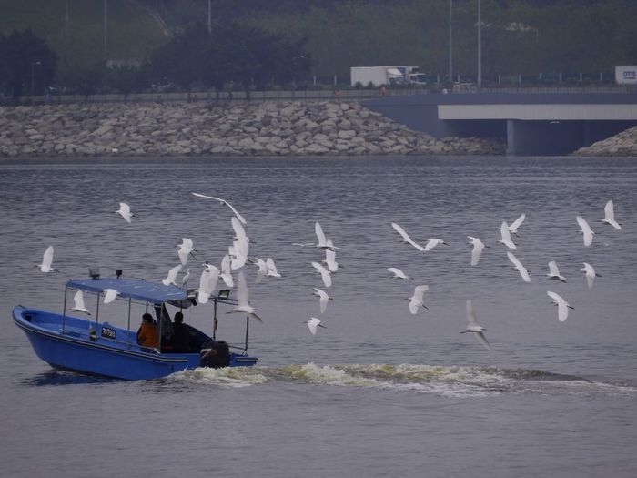 Flocks of egrets Egrets Nautical Vessel Water Sea Boat Horizon Over Water Sailing