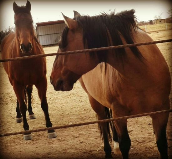 Animal_collection Farm Animals Horses Animalposing Horse Life Animal Photography I Love Horses