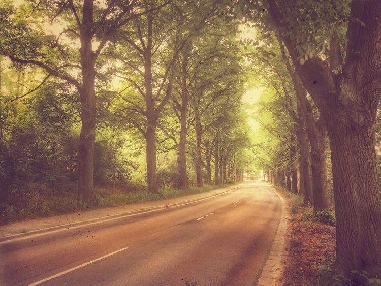 Allee Baumallee Streetphotography Landscape_Collection Landscape Allee Light Tree Road The Way Forward Direction Plant Transportation Nature Beauty In Nature Tranquility Sunlight Tranquil Scene Street City Outdoors