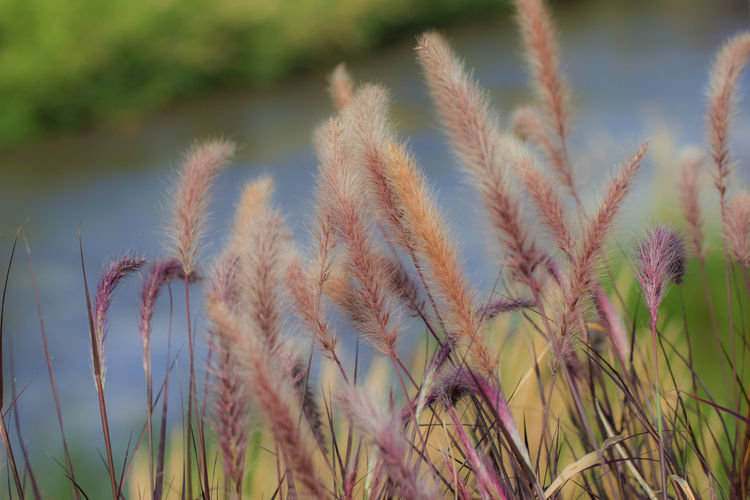 Canon60d Canonphotography Day Fountain Grass Grass Growth Nature Outdoors Plant Purple River Water