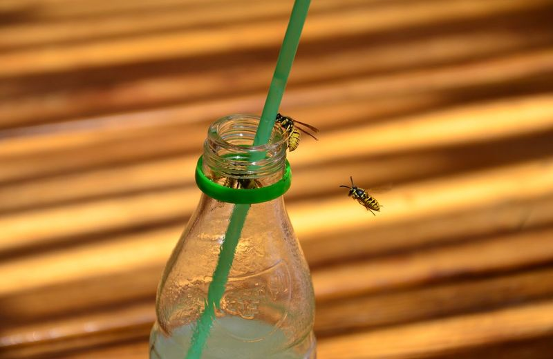 Close-up of insect on glass bottle