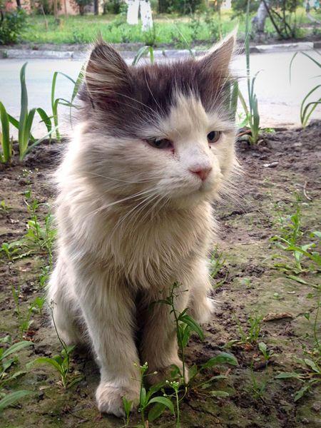 Коты котэ кот Cats Of EyeEm Cat♡ Cats Cat Cat Lovers Cats 🐱 Catsagram Homeless Cats