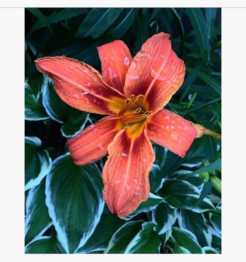 Plant Transfer Print Growth Flowering Plant Flower Beauty In Nature Auto Post Production Filter