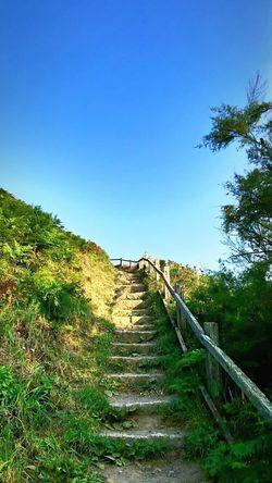 Cornwall Walks Clear Sky Steps Blue Outdoors Green Color Lizard