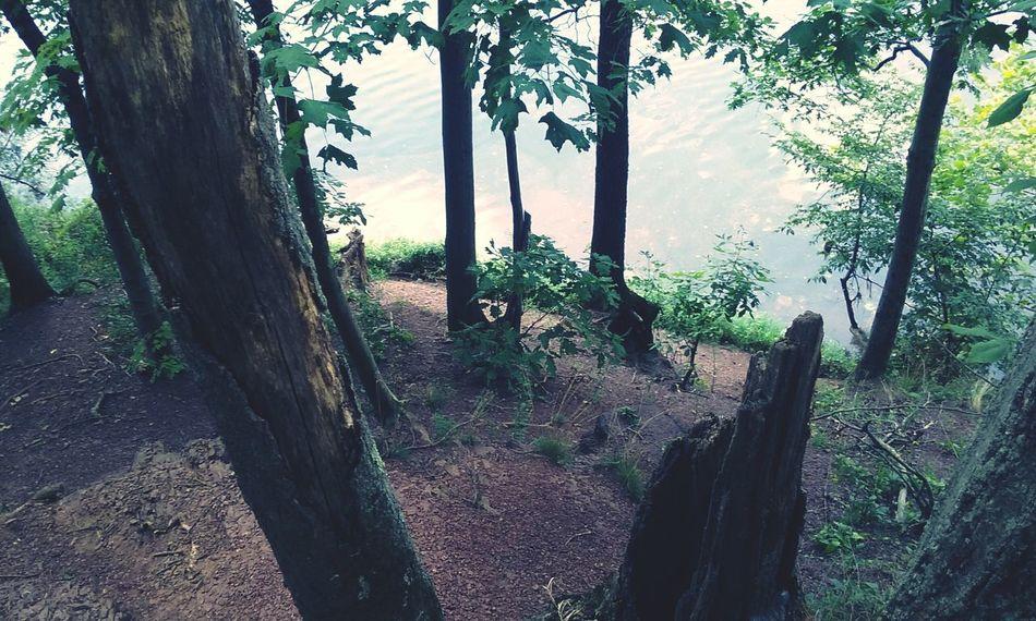 Trees Duke Island Park Nj Trishann Artlovelaughter First Eyeem Photo