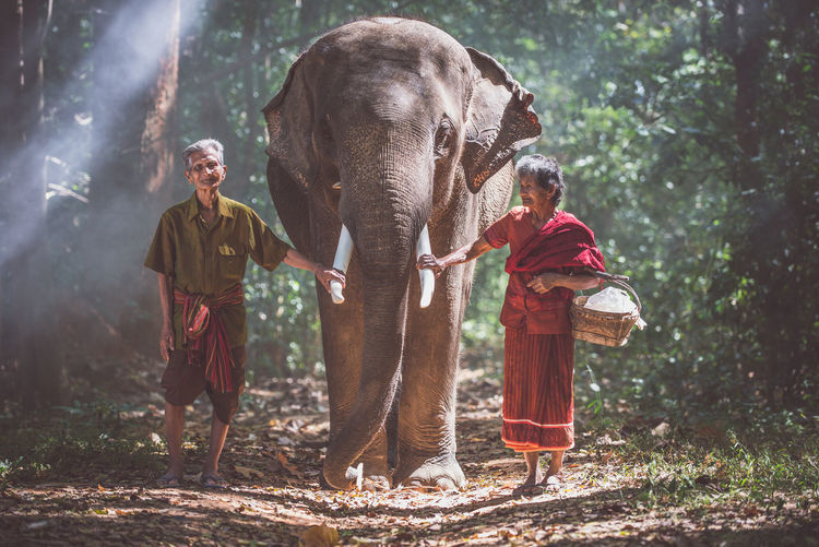 Senior couple touching elephant tusk in forest