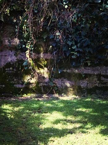 Boost Filter Secret Garden Weeds <3