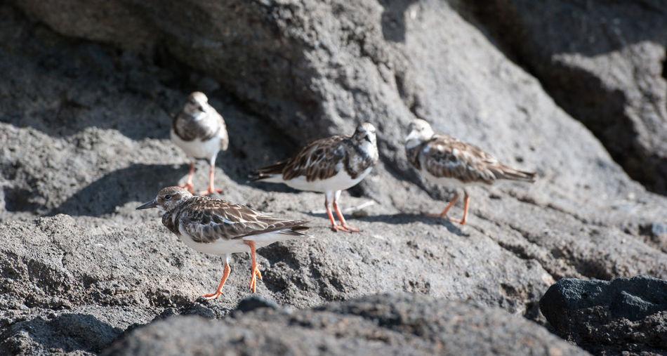 Seagulls perching on rocks