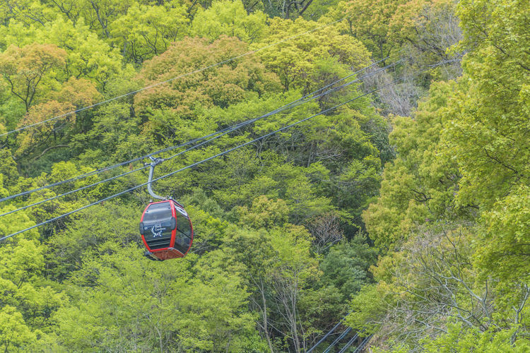 KOBE ropeway Mode Of Transportation Transportation Tree Plant Green Color Land Vehicle Land Lush Foliage Day Foliage Nature Forest Beauty In Nature Motor Vehicle Growth Travel Car Scenics - Nature Environment Mountain No People Outdoors