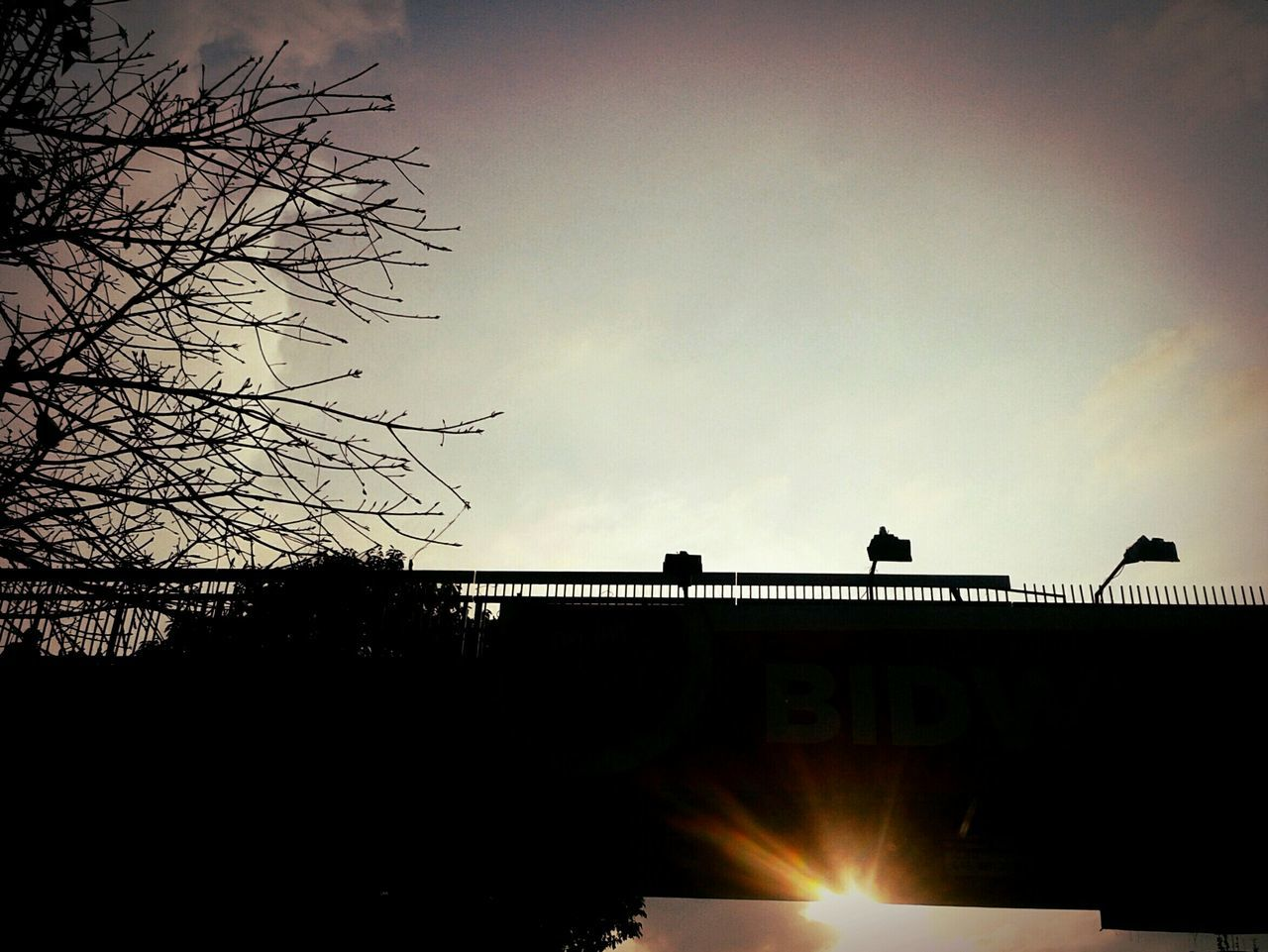 silhouette, built structure, architecture, bird, sky, sunset, animal themes, outdoors, building exterior, low angle view, tree, nature, day, animals in the wild, no people, perching, beauty in nature, city