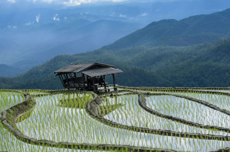 Scenic View Of Rice Paddy By Mountains Against Sky