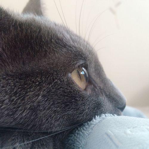 Cat Cat Eyes First Eyeem Photo