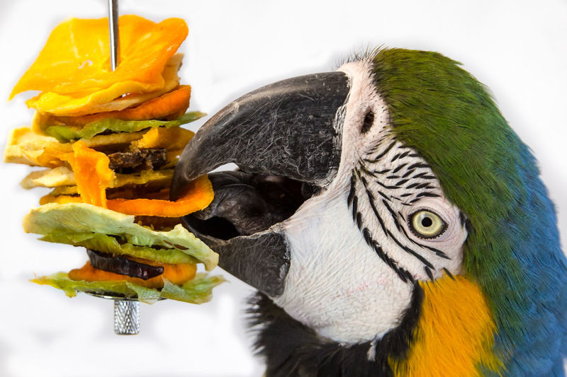 Parrots snacking Animal Animal Body Part Animal Eye Animal Food Animal Head  Animal Themes Animal Wildlife Animals In The Wild Beak Beauty In Nature Bird Close-up Focus On Foreground Food Macaw Macaw Parrot Macaws Nature One Animal Outdoors Parrot Parrot Food Parrots Vertebrate Yellow