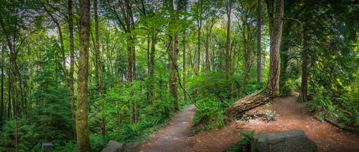 Which way to go? Beauty In Nature Forest Green Green Color Hoyt Arboretum Lush Foliage Nature Non-urban Scene Outdoors Pdx Plant Portland, OR Tranquil Scene Tranquility Tree Tree Trunk WoodLand