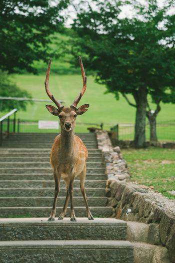 Portrait of deer standing on tree