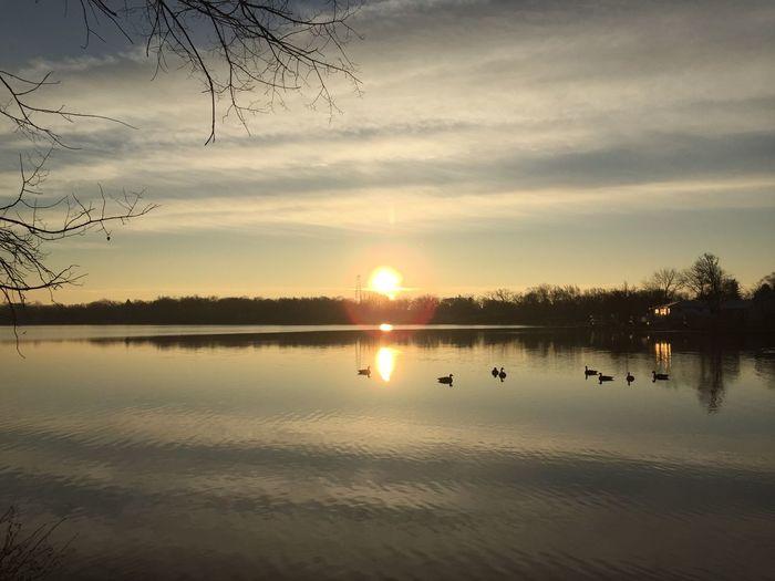 Sunrise Sunshine Lake Lake View Geese Lake Zürich Christmas Morning