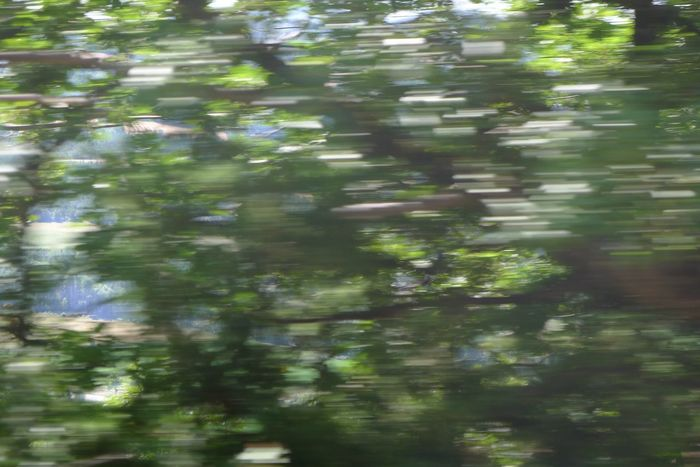 Bloom Green Green Green Green!  Landscape Speed Sunrise Trees Vitesse
