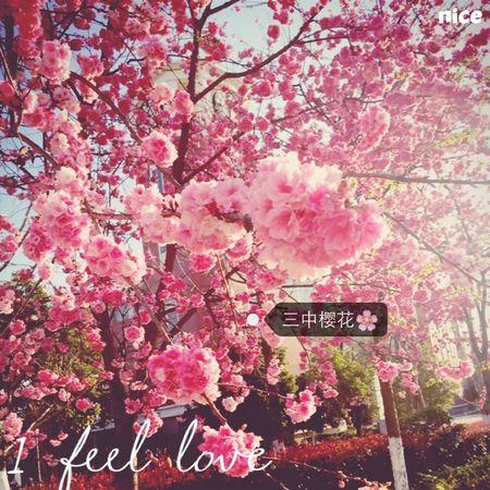 云南樱花😯😯🌸 Hello World My Face My Style My School~~
