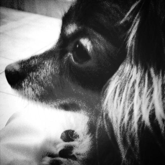 IPhoneography Dog Justgoshot