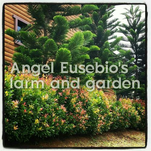 Check This Out Good Service Originality Satisfaction Quality Landscaping_services EyeEm Best Shots - Landscape Enjoying Life