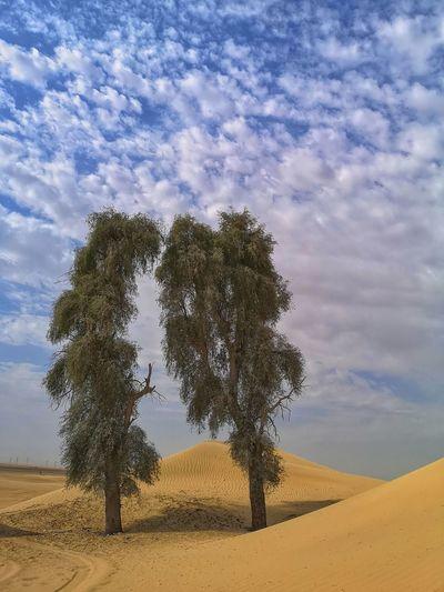 Trees on sand dunes against sky