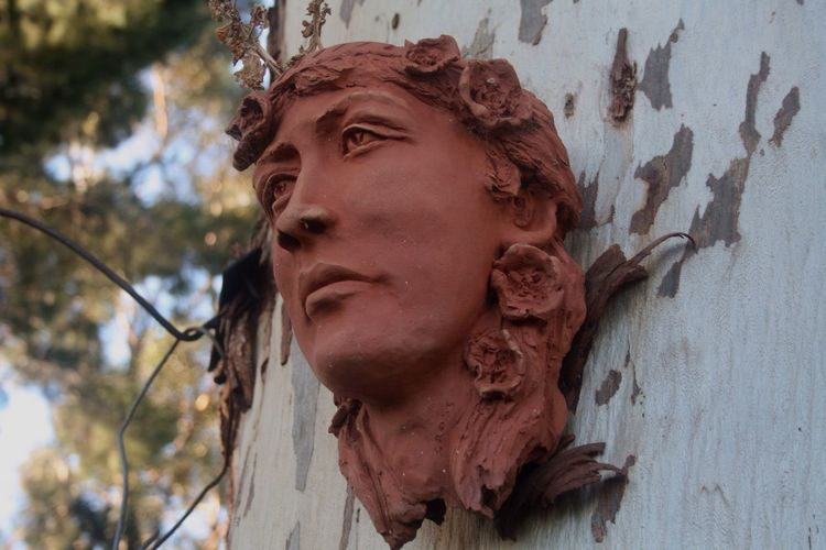 Sculpture on a gum tree Head Sculpture Gum Tree Trunk