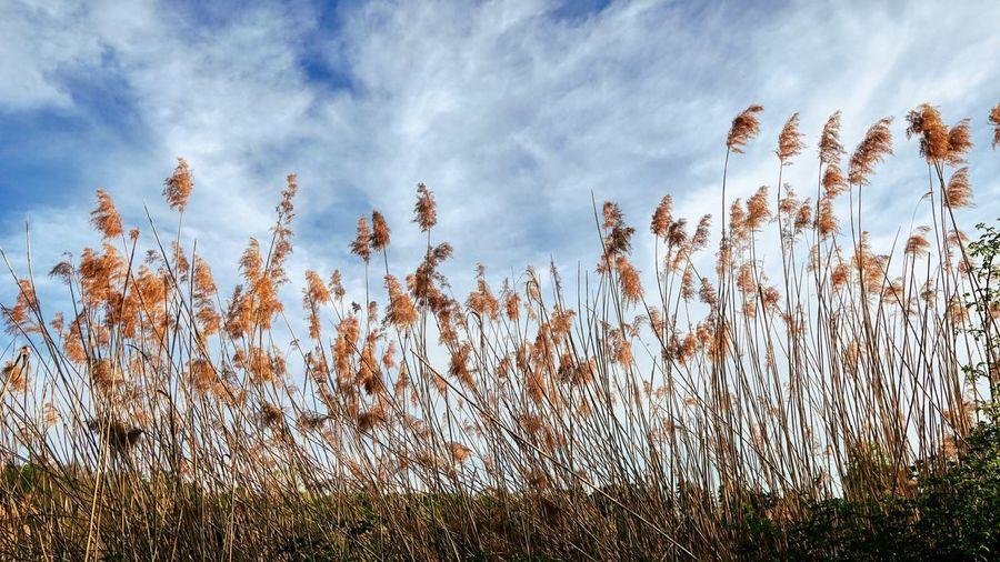 Plant Sky Cloud