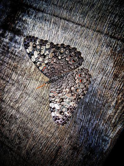 A 🦋 butterfly . Butterfly Butterfly - Insect Butterfly Collection Butterfly ❤ Butterfly Macro Butterfly Garden Butterfly Wings Butterflys Butterfly Wonderland Butterfly Encounter Butterflycatchers Butterfly Closeup Butterfly World Butterfly Farm BORBOLETA Borboletas Borboletas Do Brasil Borboletabeauty Mariposa Mariposas Mariposa En La Naturaleza