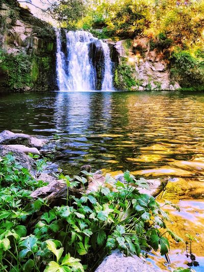 Waterfall Salabrone Nature_collection Nature Photography Summer Autumn Italy Plant Plants Holydays Journey Travel Travel Destinations Traveling Travel Photography Farnese Water Nature Day Outdoors Lake Beauty In Nature No People Scenics Tree Close-up